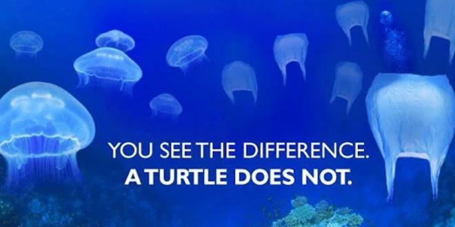 Une tortue ne fait pas la différence