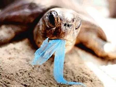 Le plastique tue les tortues